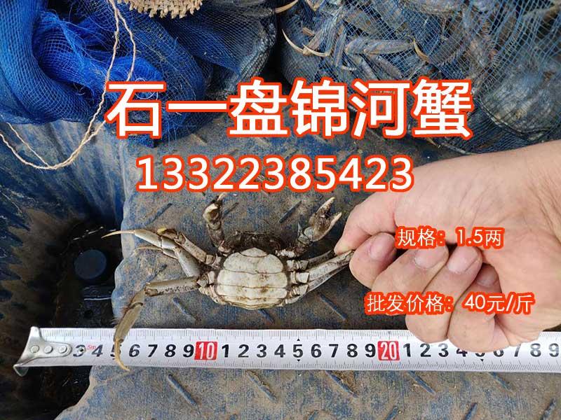 1.5两的母河蟹价格多少钱一斤