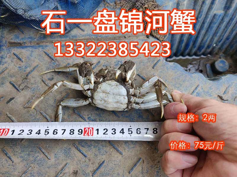 2两的母河蟹价格多少钱一斤
