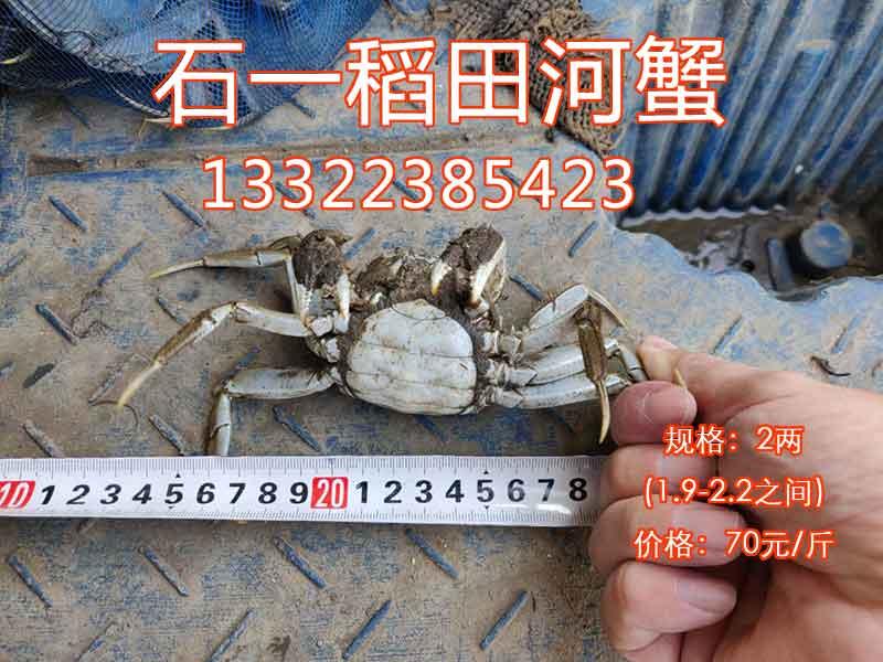 河蟹二两的多少钱?哪里批发上货?