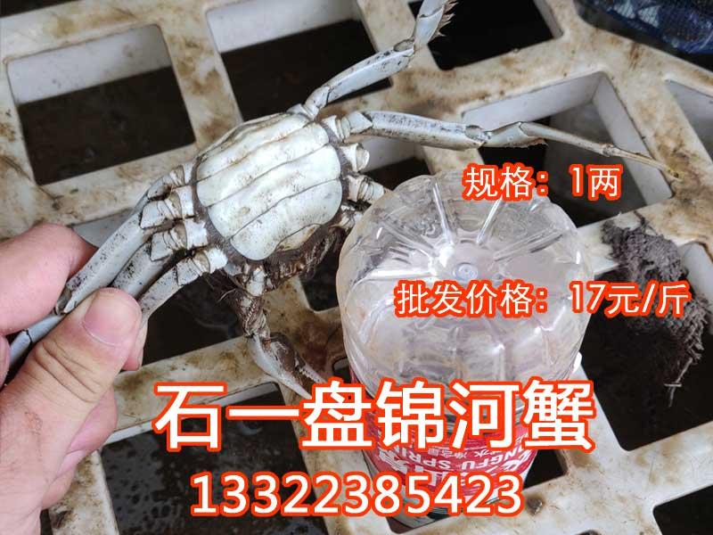 1两的母河蟹多少钱一斤