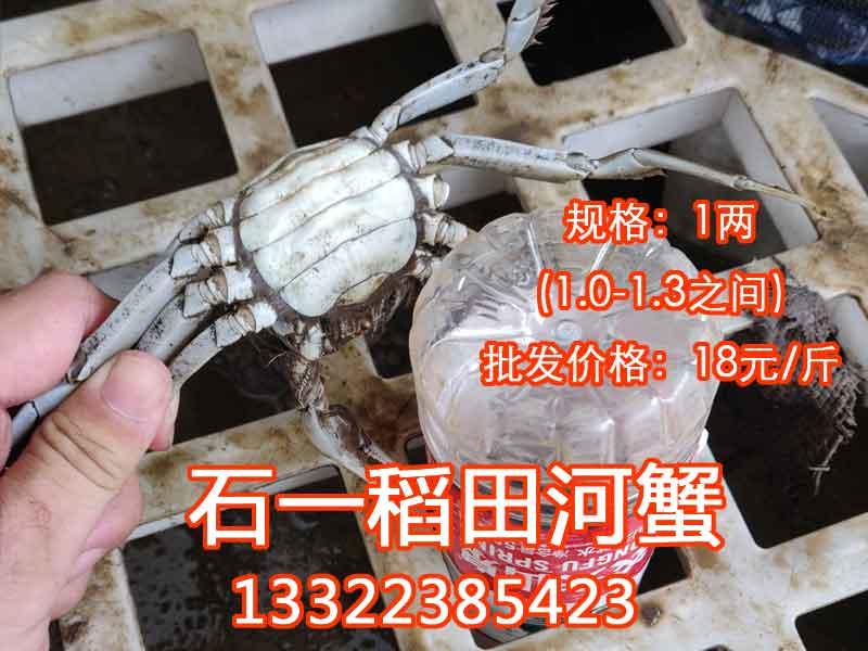 一两的河蟹价格多少钱一斤?