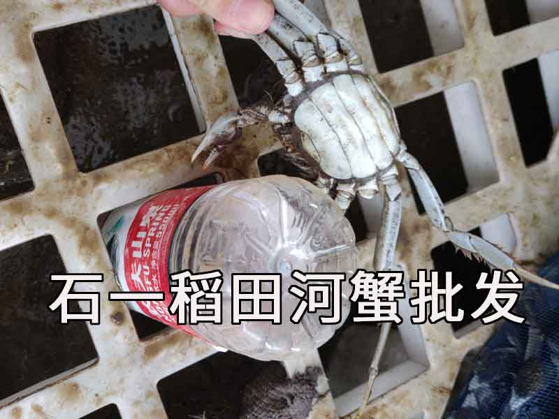 清蒸河蟹的做法与清蒸时间