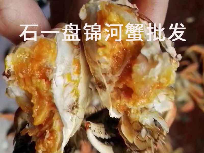 盘锦河蟹最大几两?