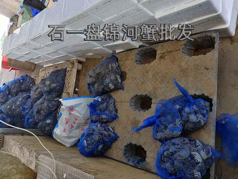 盘锦稻田河蟹死了还能吃吗?