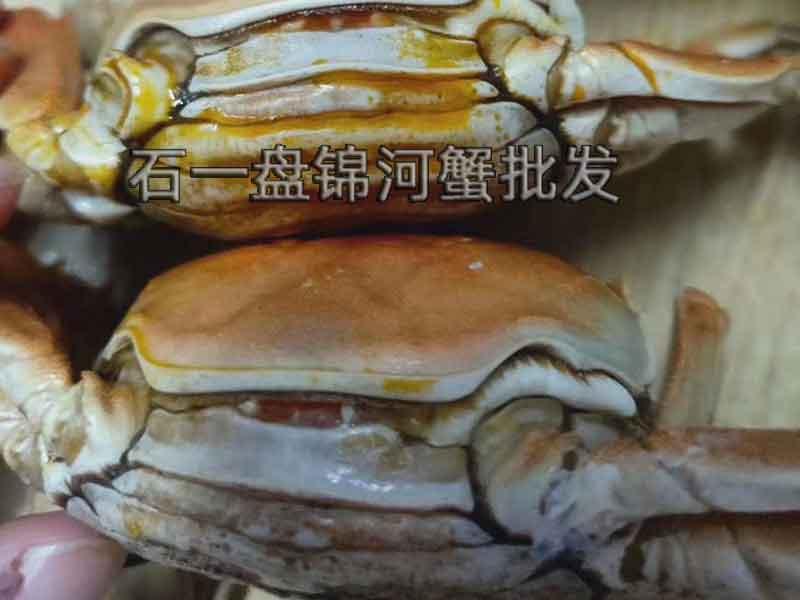 什么时候盘锦河蟹最肥