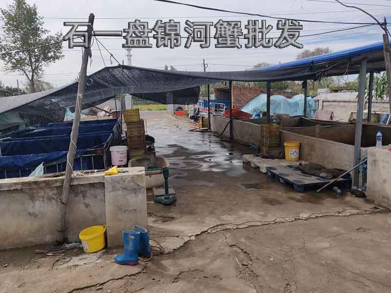 养殖河蟹需要什么条件