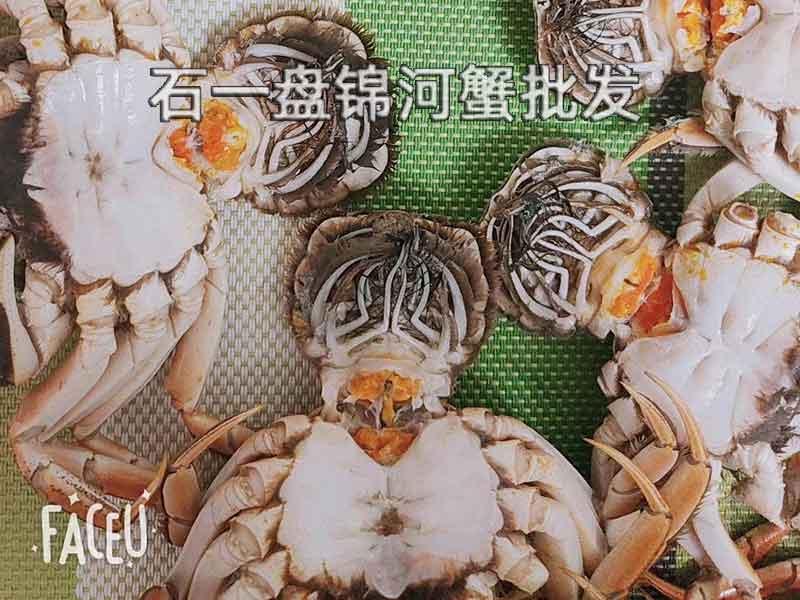 稻田河蟹几月份成熟