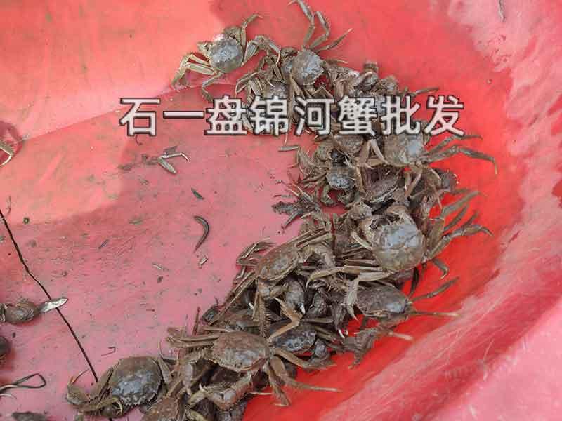 稻田河蟹与河蟹价格上有什么区别