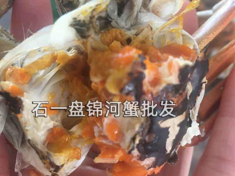 稻田河蟹如何区分