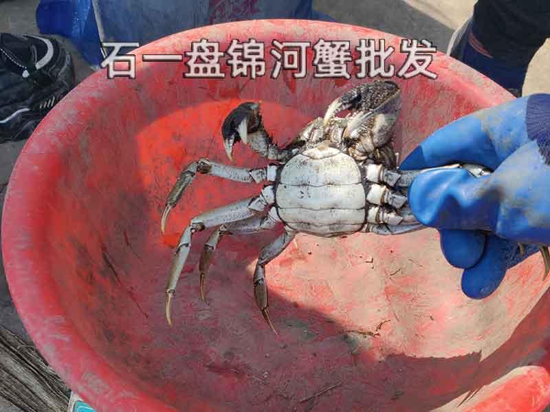 如何分辨河蟹的好和坏